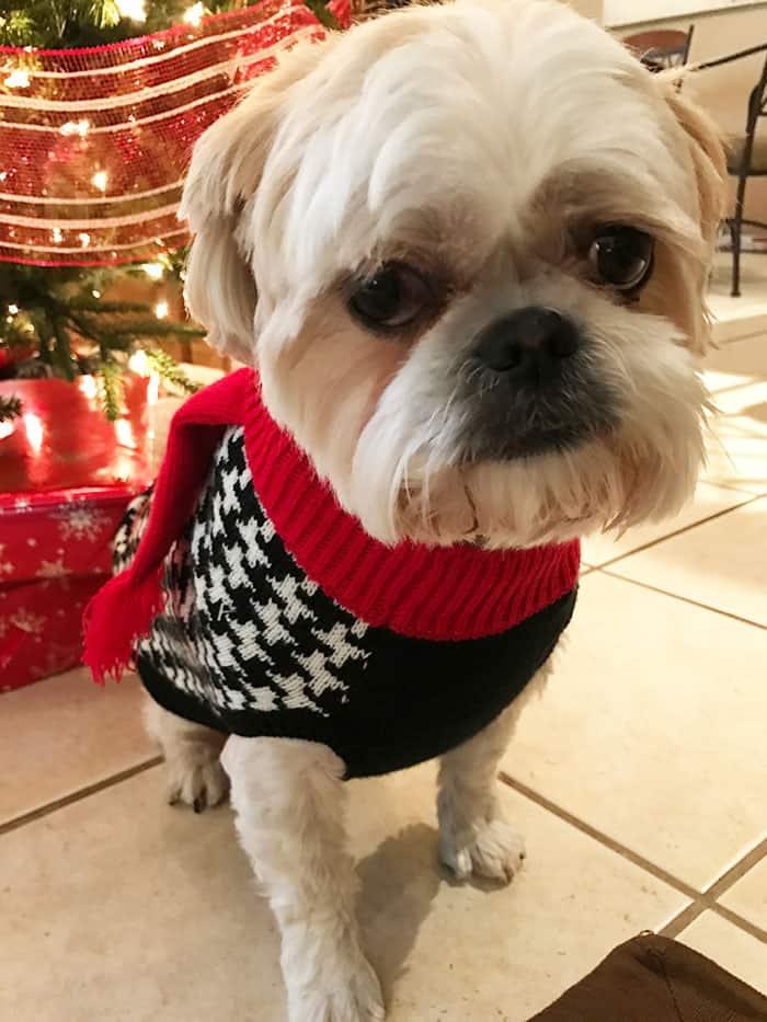 Merry Christmas from the Ringsdorfs! | suebeehomemaker.com