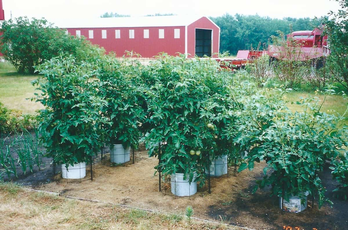 A picture of the garden.
