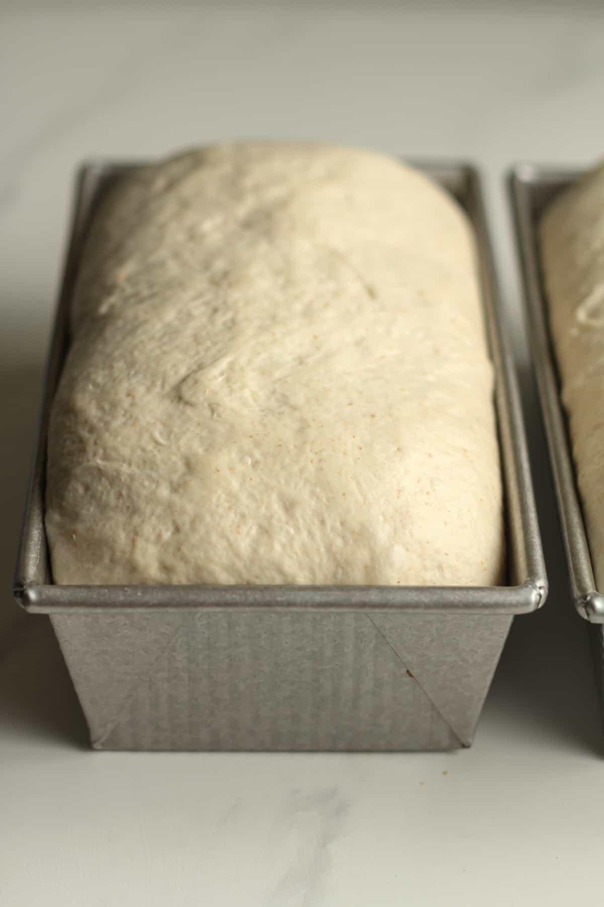 Side shot of sourdough in loaf pans.